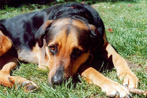Daisy dog, 2001