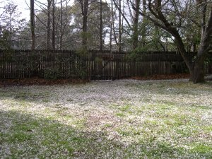 Hail in Dickson backyard